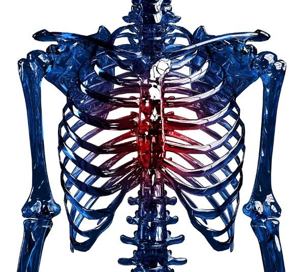 image of rib cage