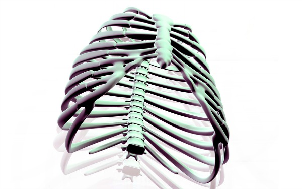 RibCage from BigStock