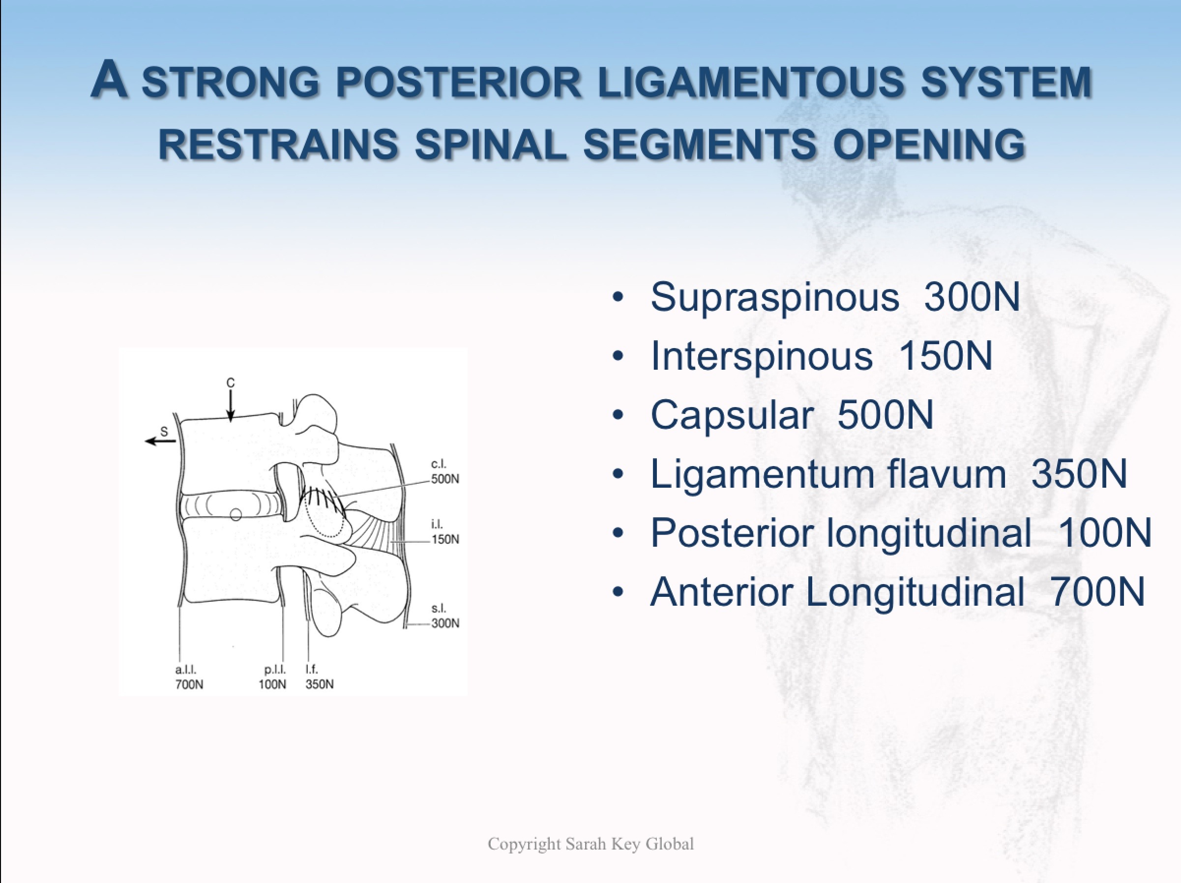 These serried ranks of lumbar ligaments from the outside in make the back very strong in flexion (bent).