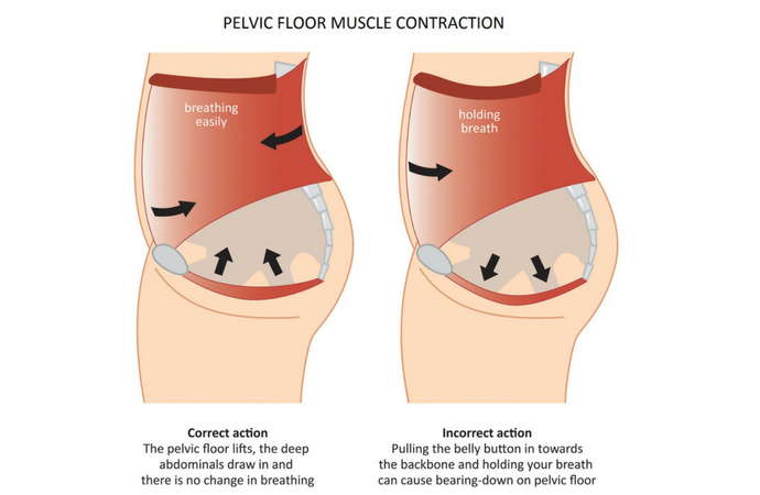 Contracting the lower abdominals and pubo-coccygeus muscles raises (and tightens) the pelvic floor